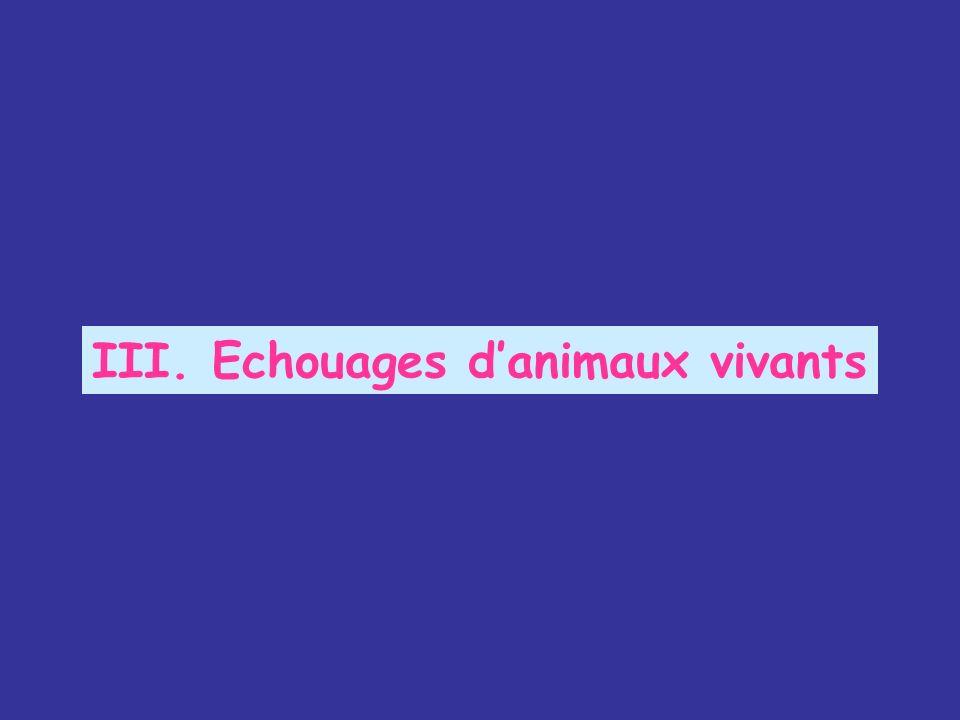 III. Echouages danimaux vivants