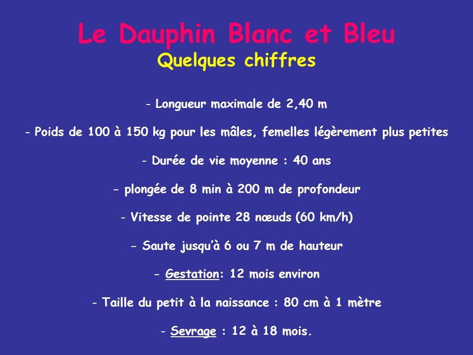 Comment le reconnaître ? Le Dauphin Blanc et Bleu Stenella coeruleoalba - Flamme blanc argenté entre l'oeil et la dorsale. Deux bandes sombres s'étend
