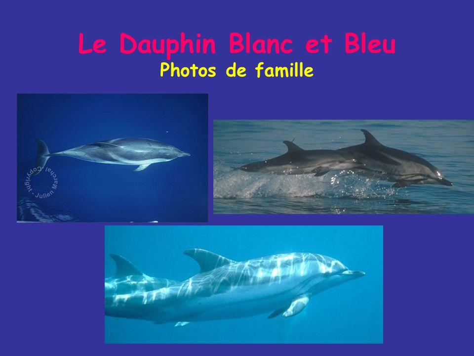 Le Dauphin Blanc et Bleu Mode de vie Il mange des poissons de petite taille et en plus faible proportion des céphalopodes et des crevettes Les groupes