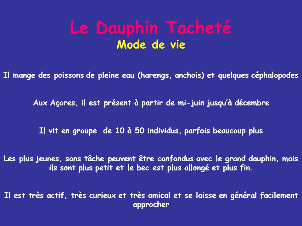 Le Dauphin Tacheté Quelques chiffres - Longueur maximale de 2,30 m - Poids: 140 kg environ - Apnées normales denviron 1 min - Vitesse supérieure à 18