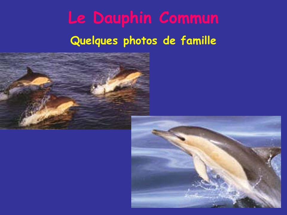 Le Dauphin Commun Quelques photos de famille
