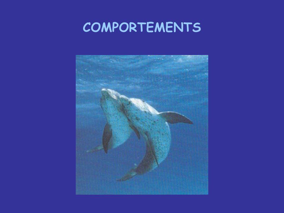 Difficultés posée par ce chapitre Notions Intelligence, Conscience .