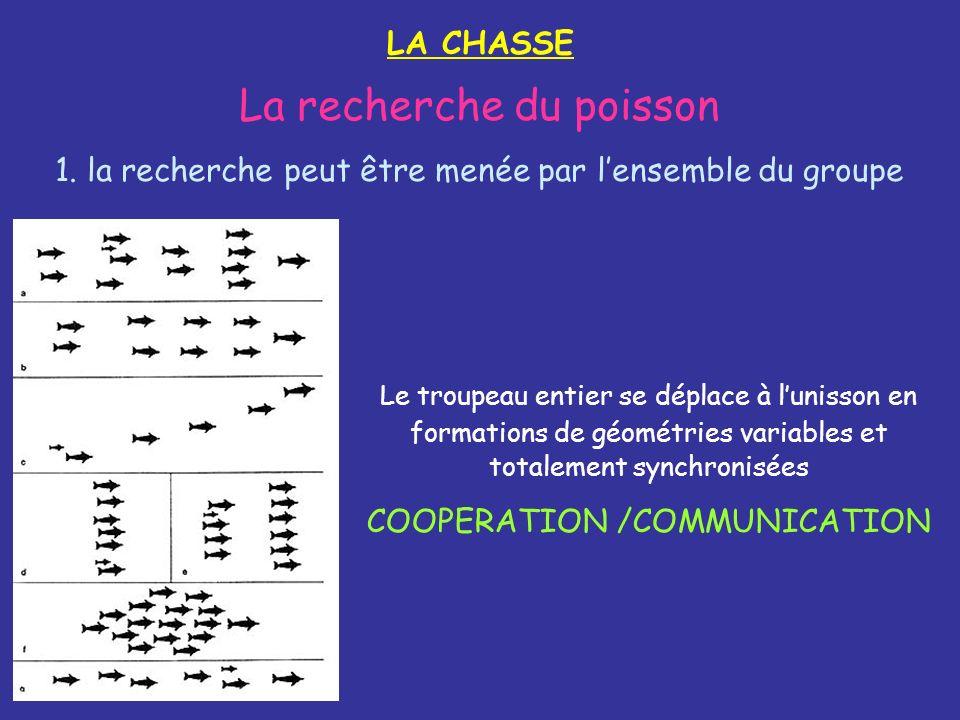 LA CHASSE La recherche du poisson 1. la recherche peut être menée par lensemble du groupe Le troupeau entier se déplace à lunisson en formations de gé