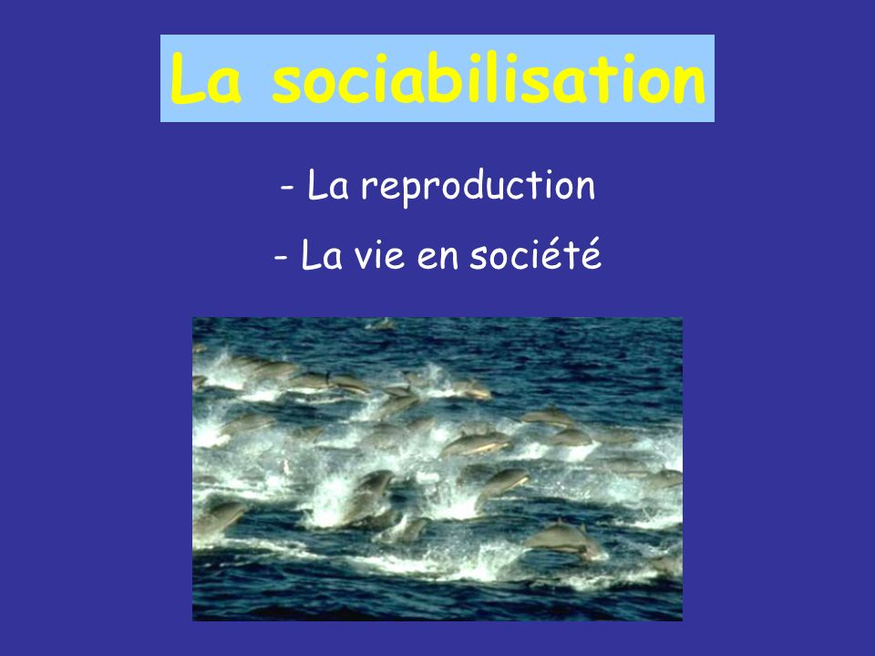 La sociabilisation - La reproduction - La vie en société
