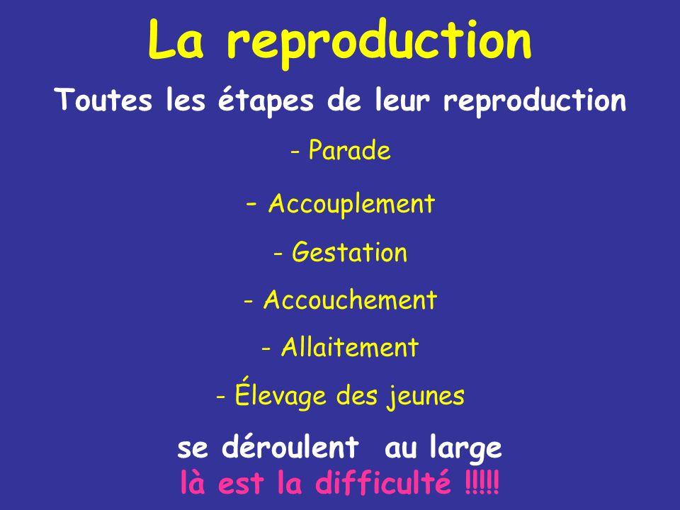 La reproduction Toutes les étapes de leur reproduction - Parade - Accouplement - Gestation - Accouchement - Allaitement - Élevage des jeunes se déroul