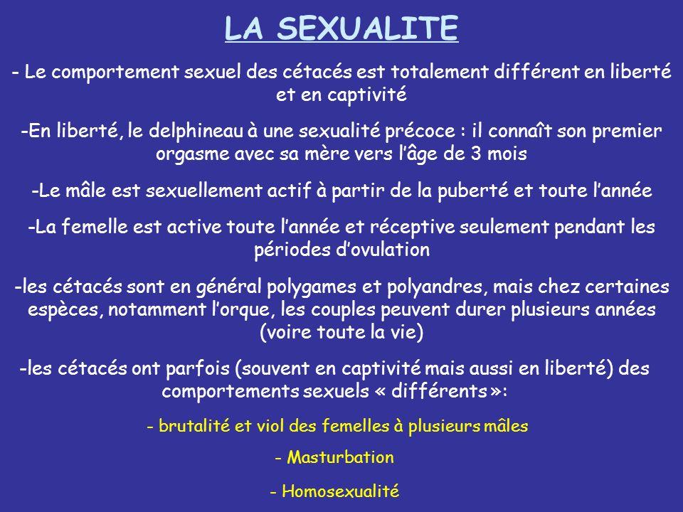 - Le comportement sexuel des cétacés est totalement différent en liberté et en captivité LA SEXUALITE -En liberté, le delphineau à une sexualité préco
