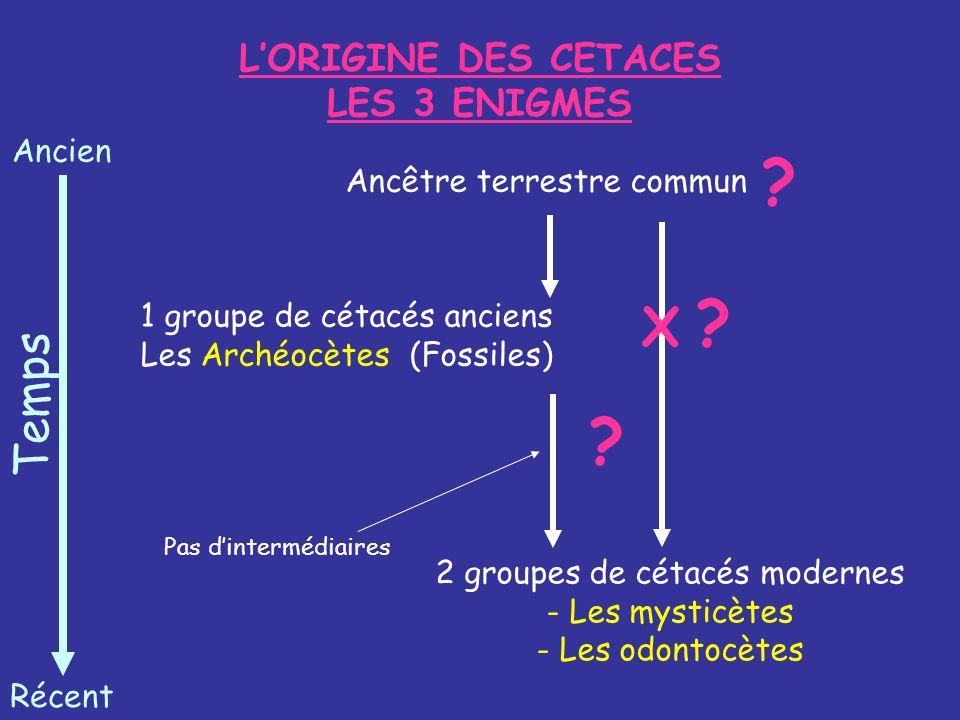 LORIGINE DES CETACES LES 3 ENIGMES 1 groupe de cétacés anciens Les Archéocètes (Fossiles) 2 groupes de cétacés modernes - Les mysticètes - Les odontoc