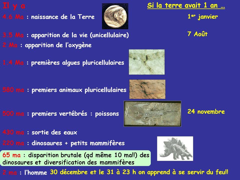 3.5 Ma : apparition de la vie (unicellulaire) 2 Ma : apparition de loxygène 1.4 Ma : premières algues pluricellulaires 580 ma : premiers animaux pluri