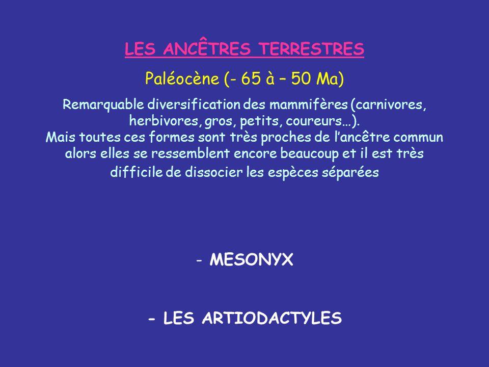 LES ANCÊTRES TERRESTRES Paléocène (- 65 à – 50 Ma) Remarquable diversification des mammifères (carnivores, herbivores, gros, petits, coureurs…). Mais