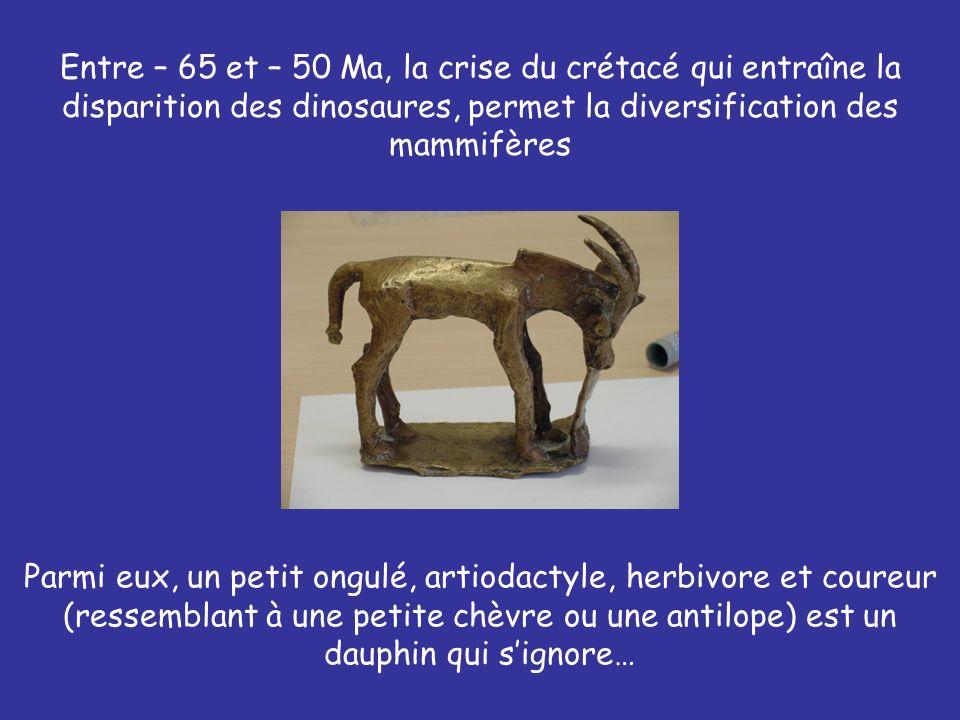 Entre – 65 et – 50 Ma, la crise du crétacé qui entraîne la disparition des dinosaures, permet la diversification des mammifères Parmi eux, un petit on