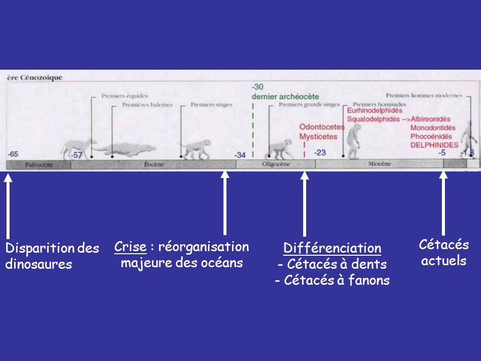 Disparition des dinosaures Différenciation - Cétacés à dents - Cétacés à fanons Cétacés actuels Crise : réorganisation majeure des océans