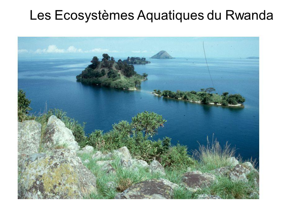 Les Ecosystèmes Aquatiques du Rwanda