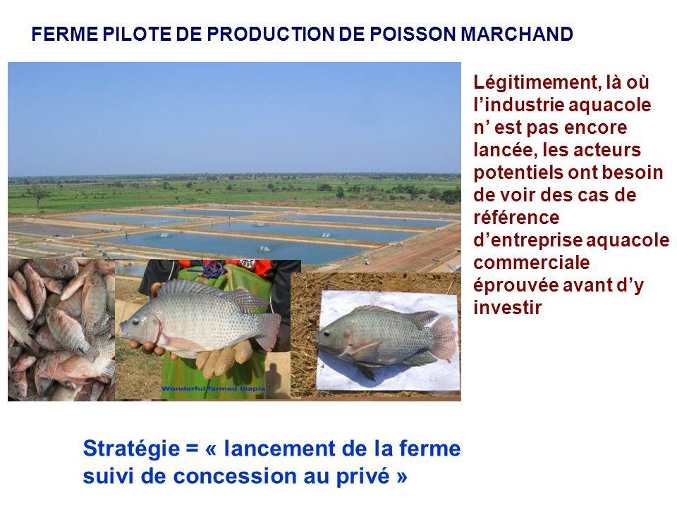 FERME PILOTE DE PRODUCTION DE POISSON MARCHAND Légitimement, là où lindustrie aquacole n est pas encore lancée, les acteurs potentiels ont besoin de v