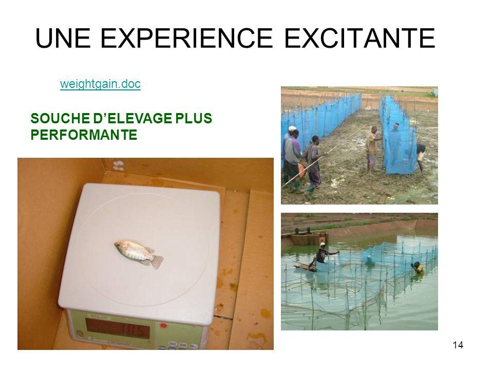14 UNE EXPERIENCE EXCITANTE weightgain.doc SOUCHE DELEVAGE PLUS PERFORMANTE