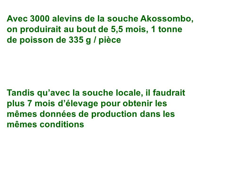 Avec 3000 alevins de la souche Akossombo, on produirait au bout de 5,5 mois, 1 tonne de poisson de 335 g / pièce Tandis quavec la souche locale, il fa