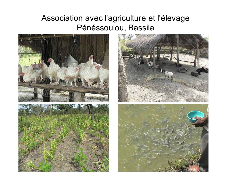 Association avec lagriculture et lélevage Pénéssoulou, Bassila