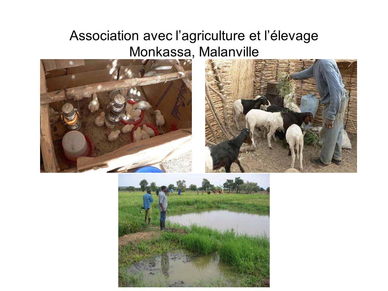 Association avec lagriculture et lélevage Monkassa, Malanville
