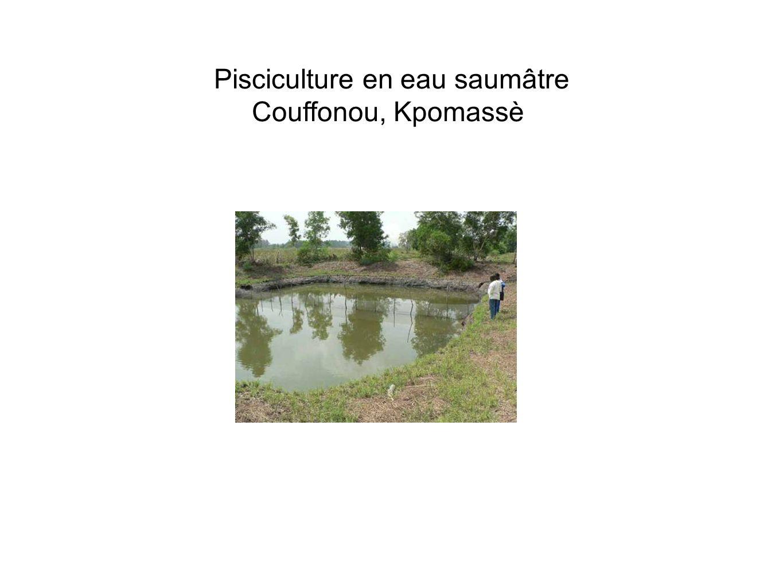 Pisciculture en eau saumâtre Couffonou, Kpomassè