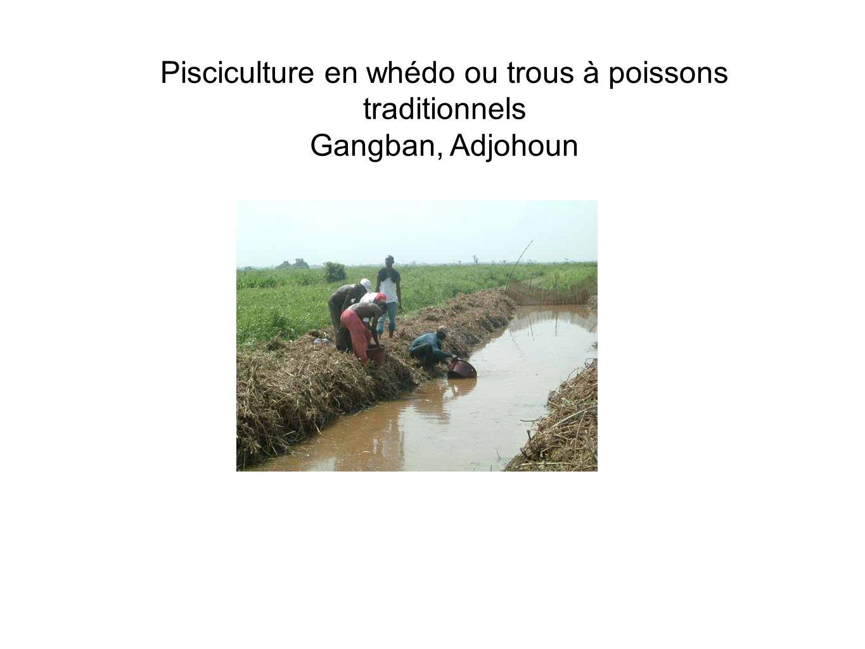 Pisciculture en whédo ou trous à poissons traditionnels Gangban, Adjohoun
