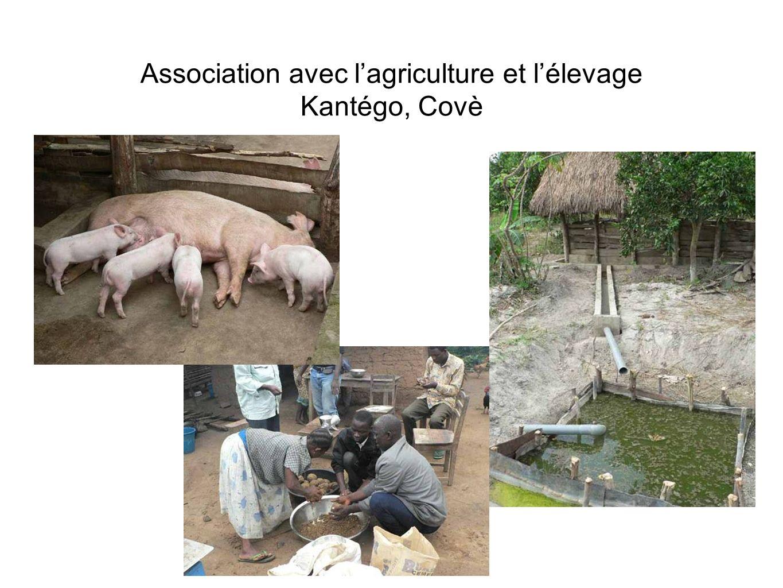 Association avec lagriculture et lélevage Kantégo, Covè