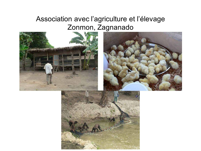 Association avec lagriculture et lélevage Zonmon, Zagnanado