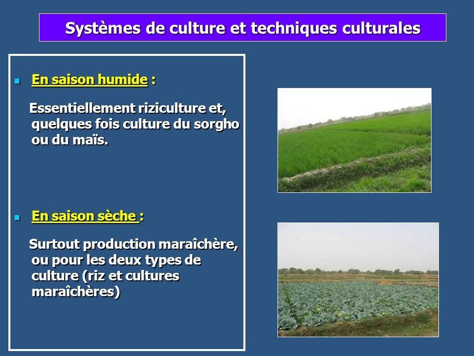 Systèmes de culture et techniques culturales En saison humide : En saison humide : Essentiellement riziculture et, quelques fois culture du sorgho ou