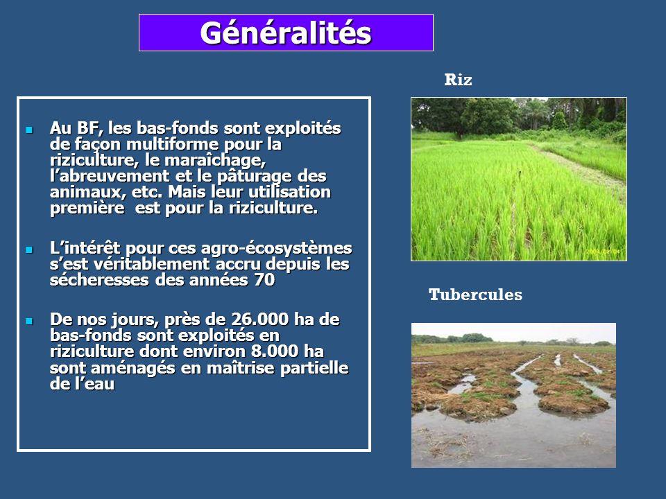 Généralités Au BF, les bas-fonds sont exploités de façon multiforme pour la riziculture, le maraîchage, labreuvement et le pâturage des animaux, etc.