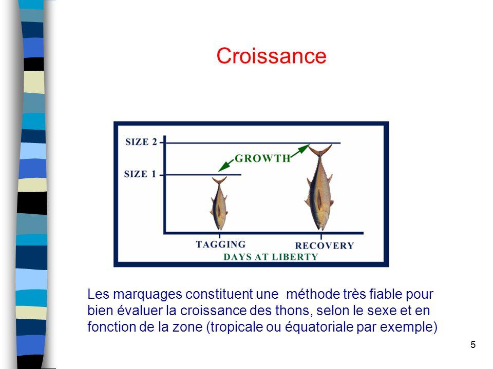 5 Croissance Les marquages constituent une méthode très fiable pour bien évaluer la croissance des thons, selon le sexe et en fonction de la zone (tropicale ou équatoriale par exemple)