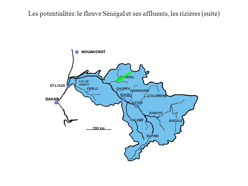 Les potentialités: le fleuve Sénégal et ses affluents, les rizières (suite)