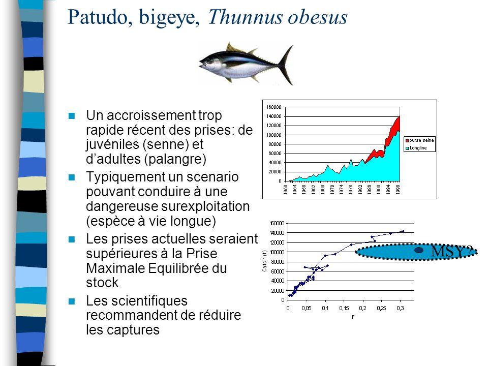 Patudo, bigeye, Thunnus obesus Un accroissement trop rapide récent des prises: de juvéniles (senne) et dadultes (palangre) Typiquement un scenario pou