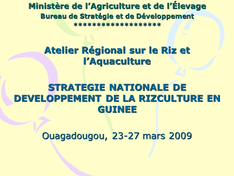 Ministère de lAgriculture et de lÉlevage Bureau de Stratégie et de Développement ******************* Atelier Régional sur le Riz et lAquaculture STRATEGIE NATIONALE DE DEVELOPPEMENT DE LA RIZCULTURE EN GUINEE Ouagadougou, 23-27 mars 2009