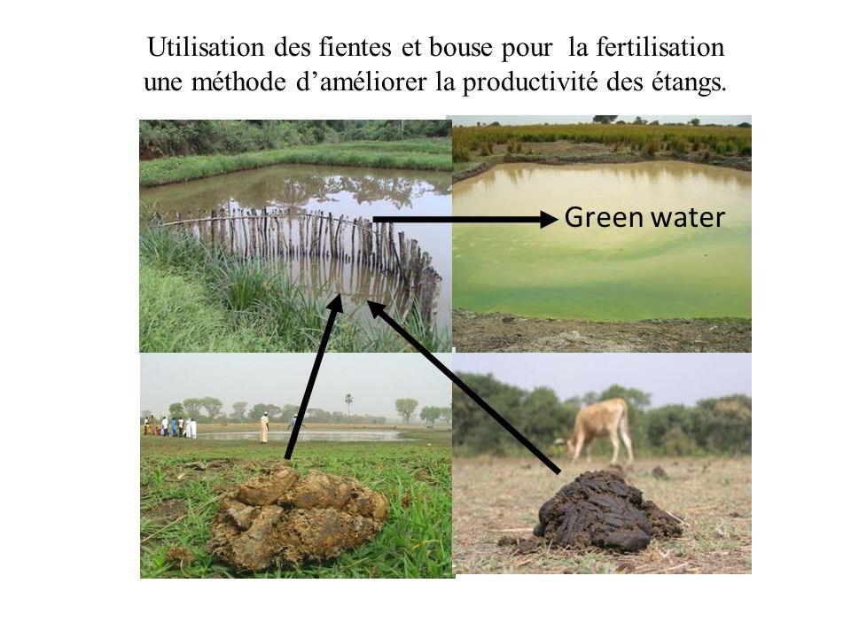 Utilisation des fientes et bouse pour la fertilisation une méthode daméliorer la productivité des étangs. Green water