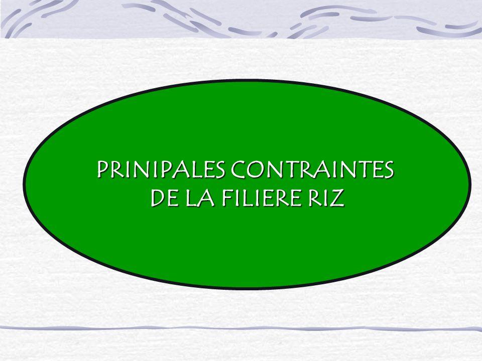 PRINIPALES CONTRAINTES DE LA FILIERE RIZ