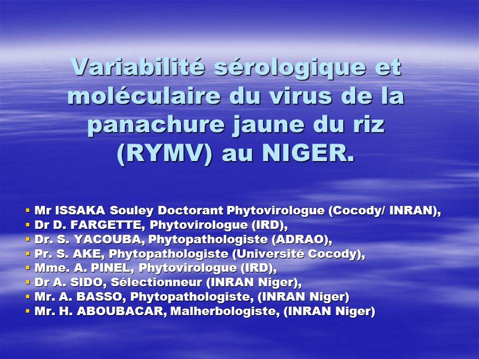 Résultats moléculaires Analyse 3 séquences spécifiques gène PC: Analyse 3 séquences spécifiques gène PC: Souche S1: 3 isolats testés, Souche S1: 3 isolats testés, Confirmation résultats sérologiques, Confirmation résultats sérologiques, Comparaison entre séquences: Comparaison entre séquences: souche S1-AC (S1-Afrique centrale), souche S1-AC (S1-Afrique centrale), Souche nigérienne: parente souches Bénin, Tchad, Nigeria, Cameroun et Togo (Fargette et al., 2004 Traoré et al., 2005), Souche nigérienne: parente souches Bénin, Tchad, Nigeria, Cameroun et Togo (Fargette et al., 2004 Traoré et al., 2005), Confirmation faible diversité sérologique RYMV- Niger.