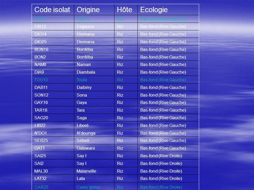 Code isolatOrigineHôteEcologie KAR1KarmaRizBas-fond (Rive Gauche) FIR12FirgouneRizBas-fond (Rive Gauche) DIO14DiomanaRizBas-fond (Rive Gauche) DIO25Di