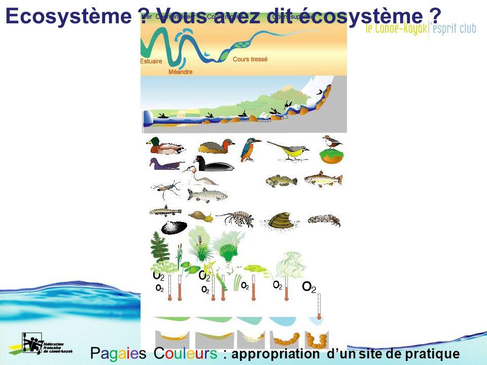 Ecosystème ? Vous avez dit écosystème ?