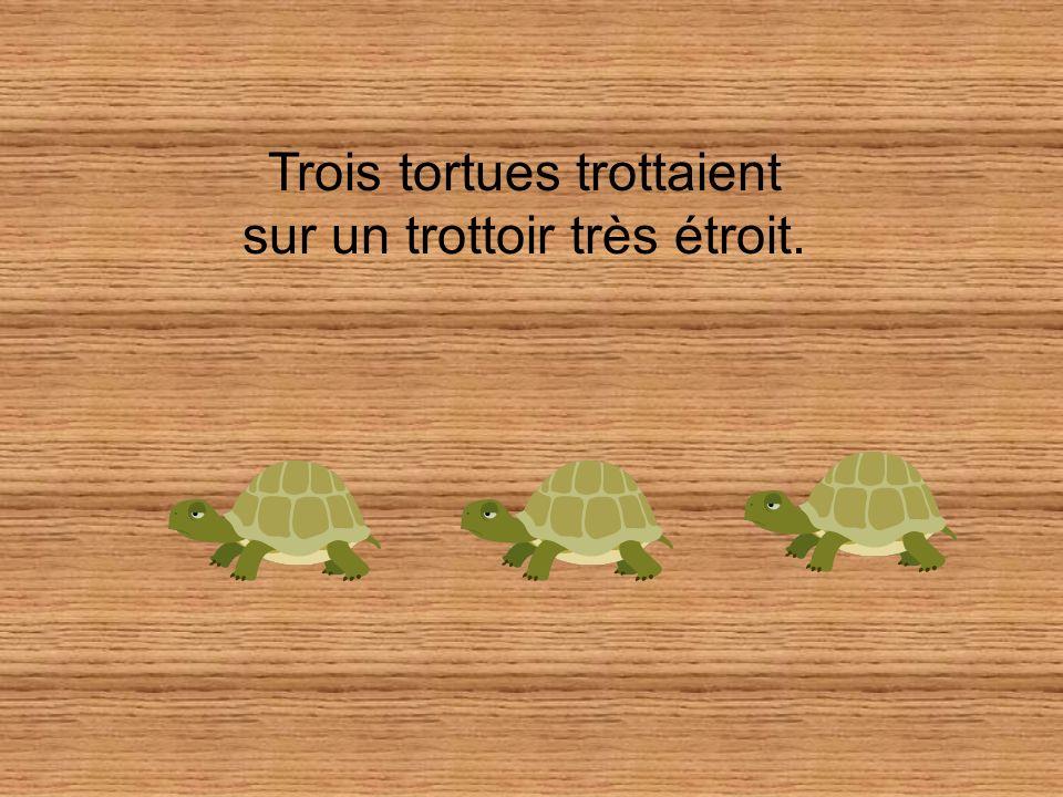 Trois tortues trottaient sur un trottoir très étroit.