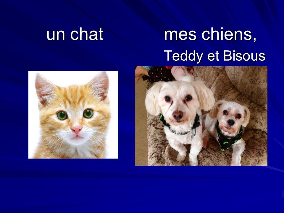 un chatmes chiens, Teddy et Bisous un chatmes chiens, Teddy et Bisous