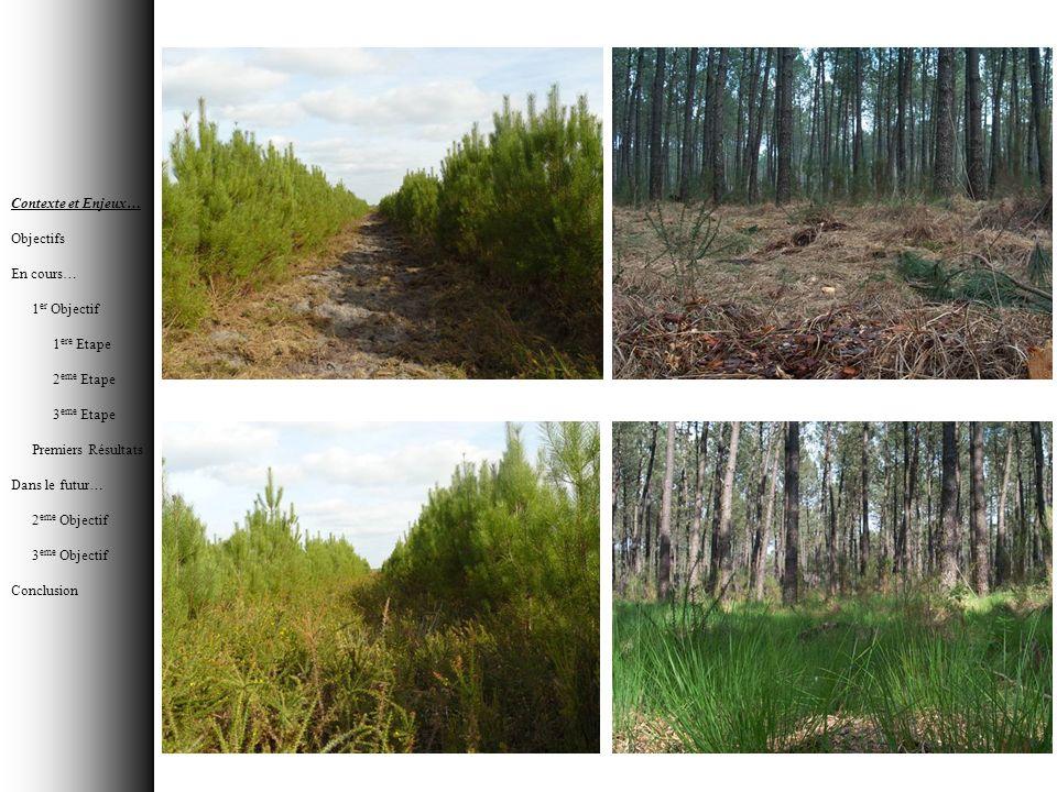 OBJECTIFS Contribution du sous-bois et des arbres dans la variation saisonnière du signal de télédétection et son hétérogénéité régionale .