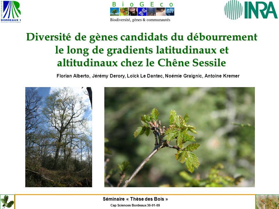 Séminaire « Thèse des Bois » Cap Sciences Bordeaux 30-01-09 Diversité de gènes candidats du débourrement le long de gradients latitudinaux et altitudi