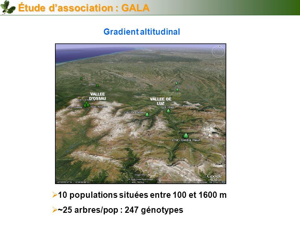 VALLEE DOSSAU VALLEE DE LUZ Gradient altitudinal 10 populations situées entre 100 et 1600 m ~25 arbres/pop : 247 génotypes Étude dassociation : GALA