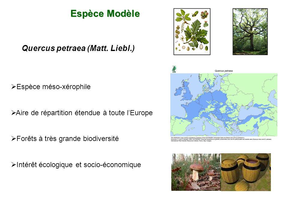 Espèce Modèle Quercus petraea (Matt. Liebl.) Espèce méso-xérophile Aire de répartition étendue à toute lEurope Forêts à très grande biodiversité Intér