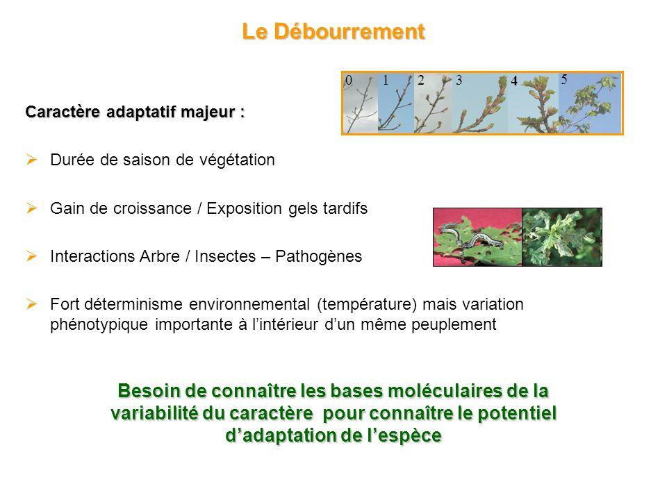 Précoce Tardif Gradient latitudinal 21 populations provenant de toute laire de répartition 30 arbres/pop : 630 génotypes Étude dassociation : GALA