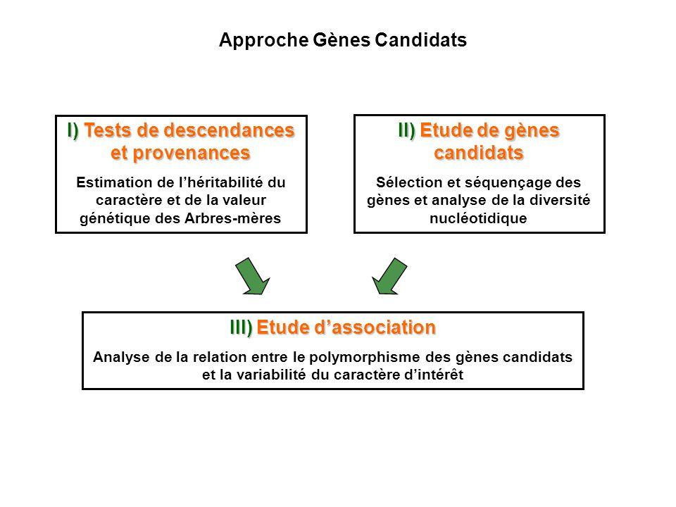 II) Etude de gènes candidats Sélection et séquençage des gènes et analyse de la diversité nucléotidique I) Tests de descendances et provenances Estima