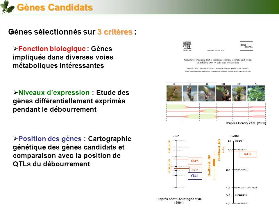 Gènes Candidats 3 critères Gènes sélectionnés sur 3 critères : SKP1 CO1 YSL1 Position des gènes : Cartographie génétique des gènes candidats et compar
