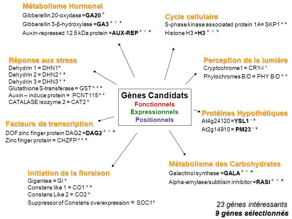 Perception de la lumière Cryptochrome1 = CRY-I * Phytochromes B/D = PHY B/D * * Métabolisme Hormonal GA20 Gibberellin 20-oxydase =GA20 * GA3 Gibberell
