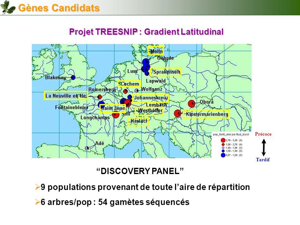 9 populations provenant de toute laire de répartition 6 arbres/pop : 54 gamètes séquencés Projet TREESNIP : Gradient Latitudinal DISCOVERY PANEL Gènes
