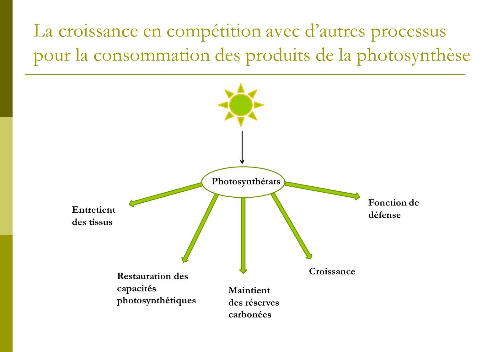 La croissance en compétition avec dautres processus pour la consommation des produits de la photosynthèse Photosynthétats Entretient des tissus Mainti