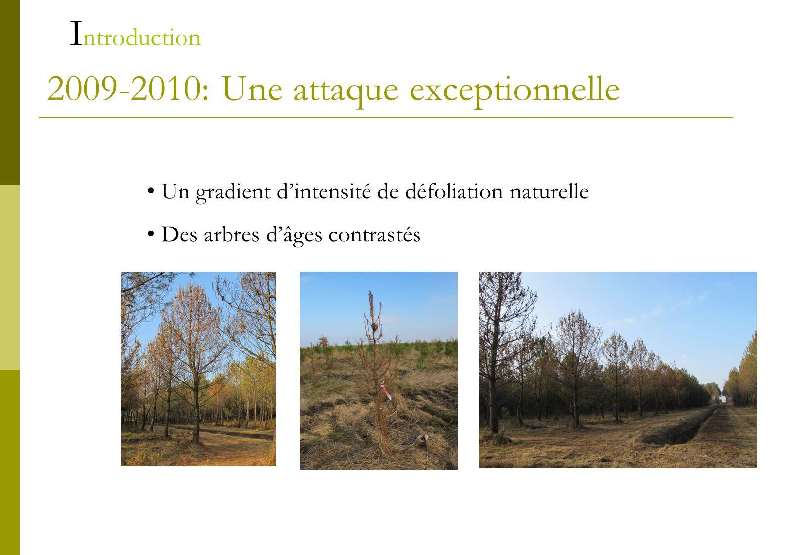2009-2010: Une attaque exceptionnelle Un gradient dintensité de défoliation naturelle Des arbres dâges contrastés I ntroduction