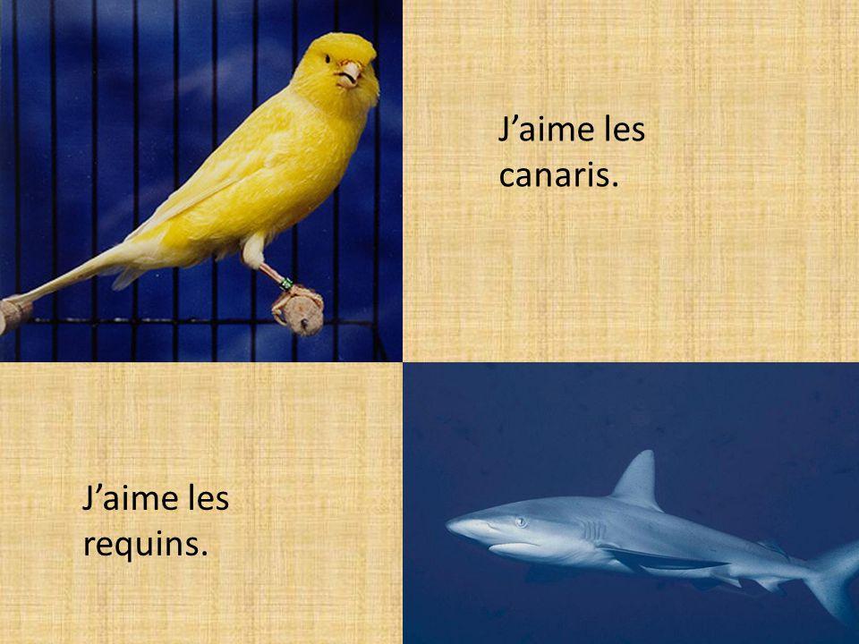 Jaime les requins. Jaime les canaris.